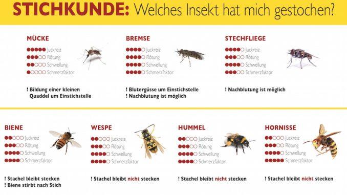 hilfe bei insektenstichen das ist im ernstfall zu tun der sp kenkieker. Black Bedroom Furniture Sets. Home Design Ideas